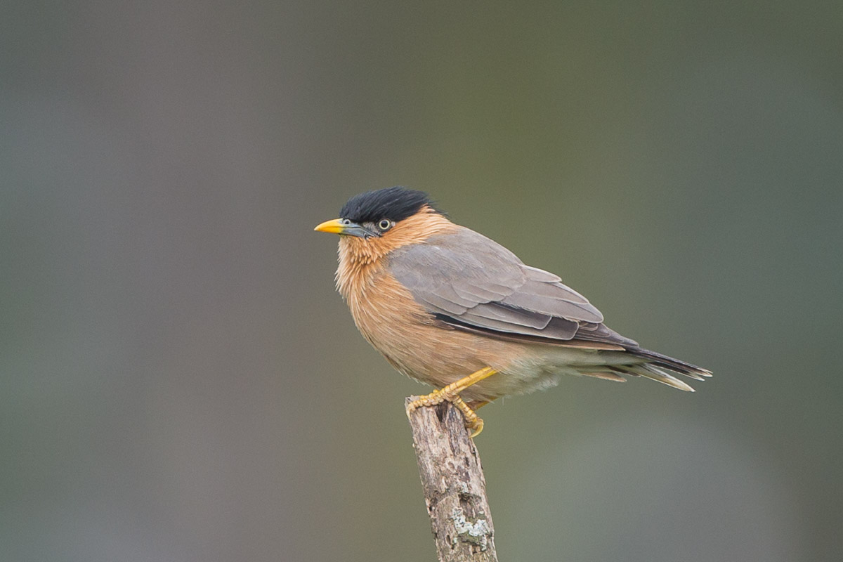 Bird List Revision for March 2020