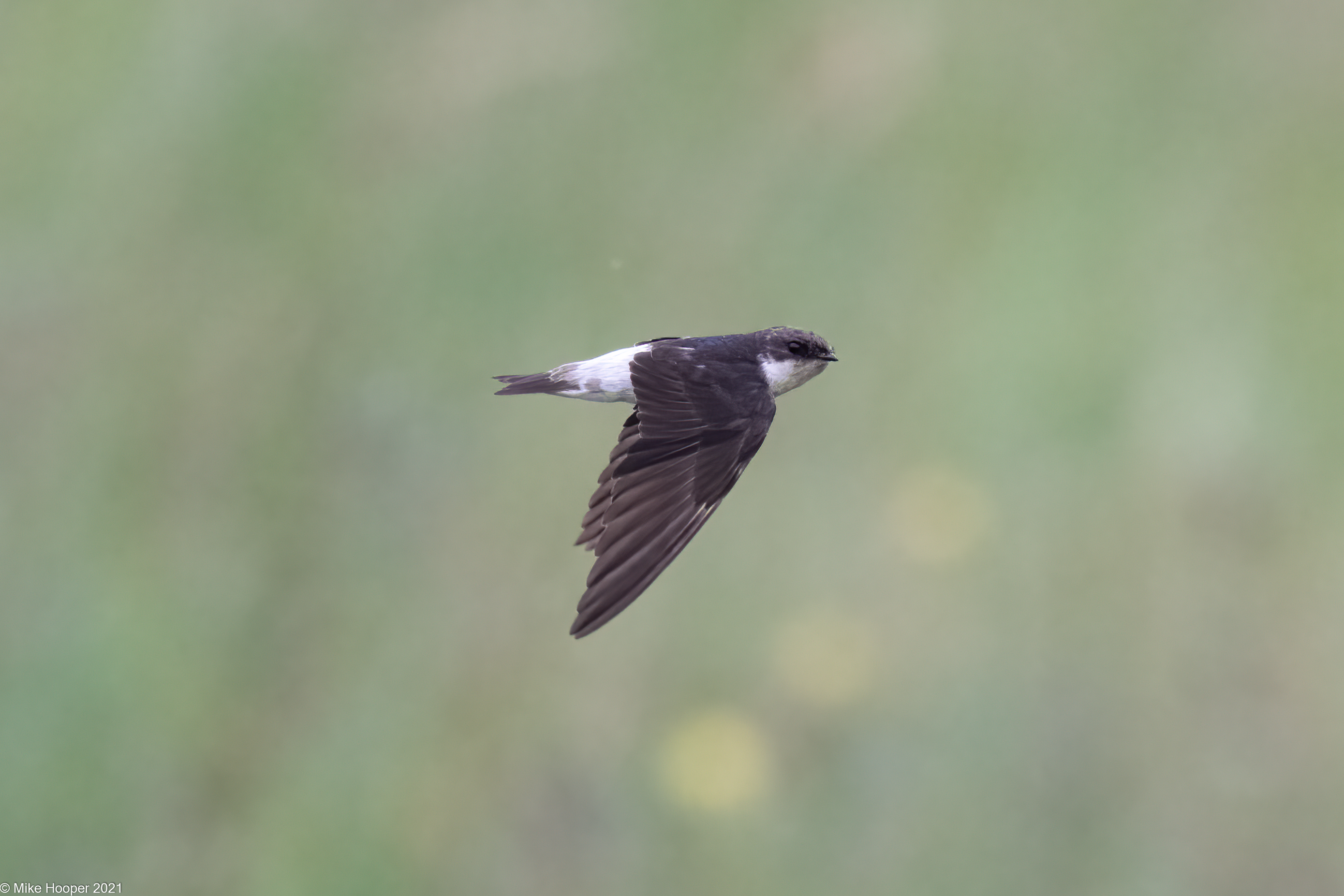 Bird List Revision for July 2021